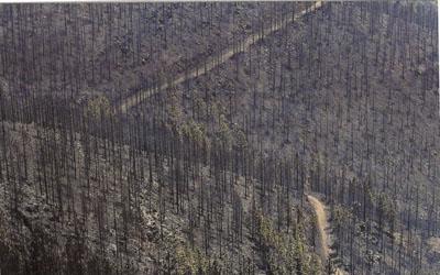 Imagen de campo quemado. Portada de El País, 22 de Junio de 2006